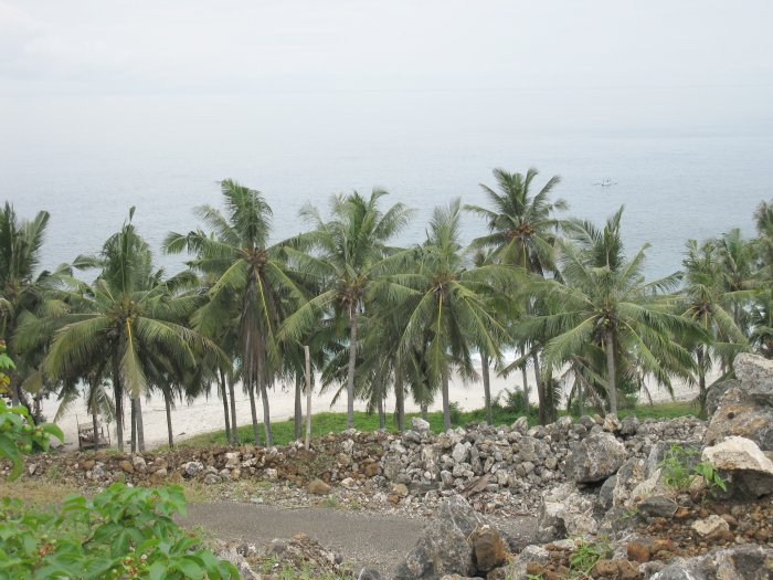 palm trees between the beach and the construction site